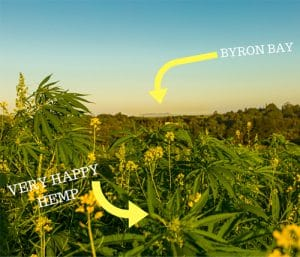 Hemp Collective Hemp Farm