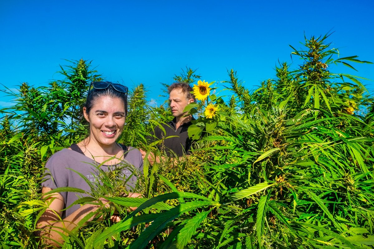 Hemp Collective in the Echo