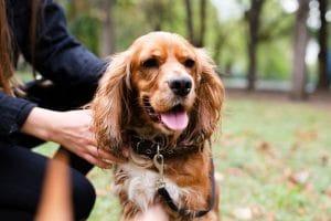 Hemp oil for Pets