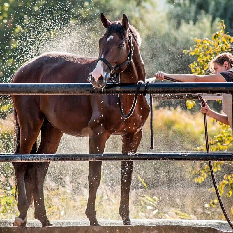 Natural Horse Shampoo Bar