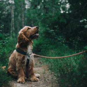 Full-Spectrum-Hemp-Oil-For-Dogs