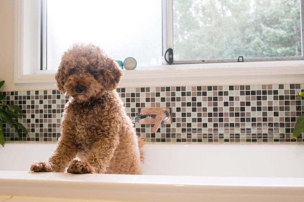 How To Bathe A Scared Dog – Tips To Make Bathtime Fun