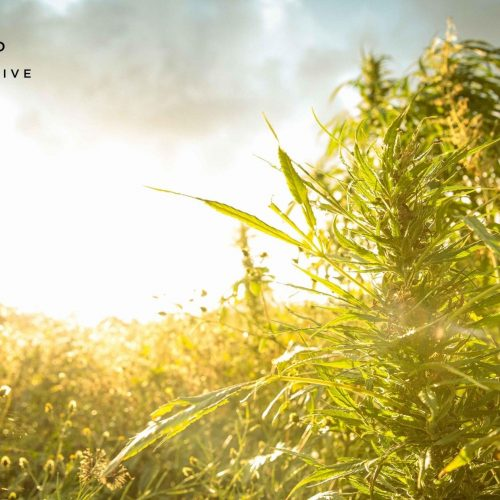 What-Are-Cannabinoids