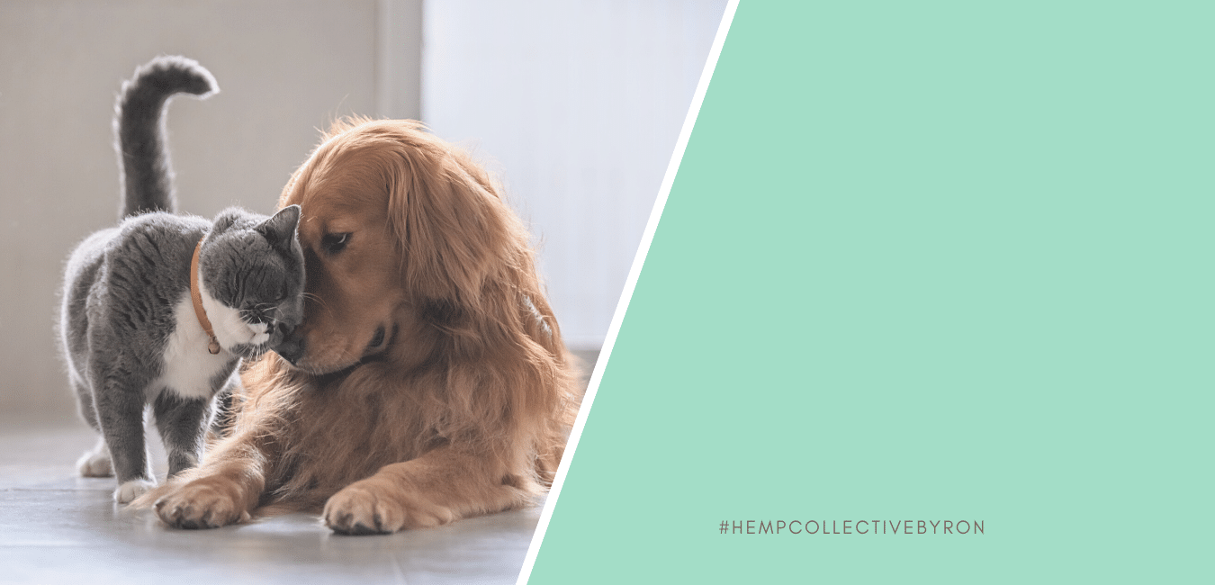 Hemp Seed Oil For Dogs, Cats And Other Pets – Benefits, Myths and Side Effects