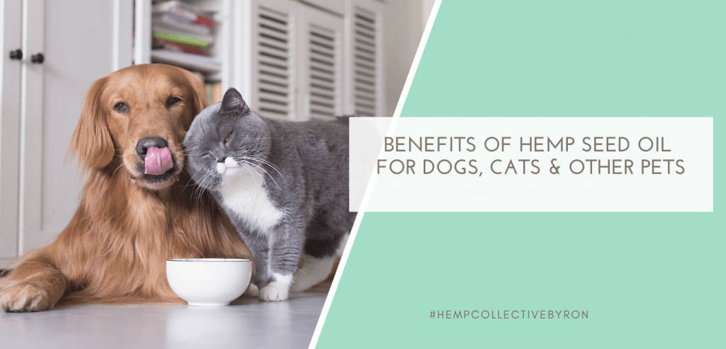 benefits-of-hemp-seed-oil-for-pets