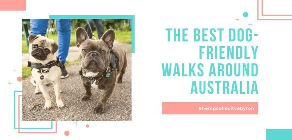 Dog-friendly-walks-Brisbane