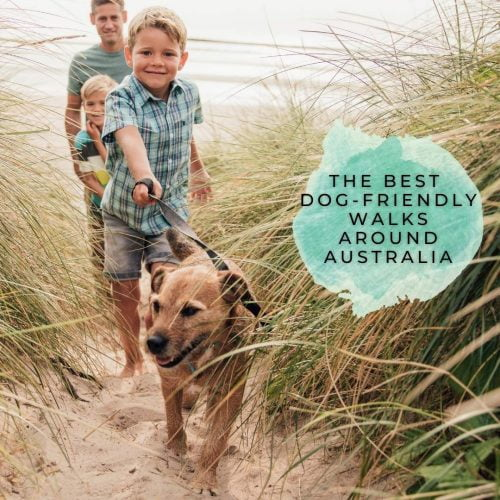 Dog-friendly-walks-Australia