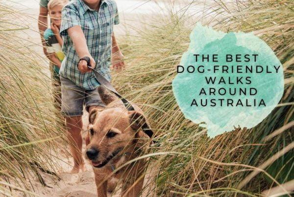Dog-friendly-walks-Australia