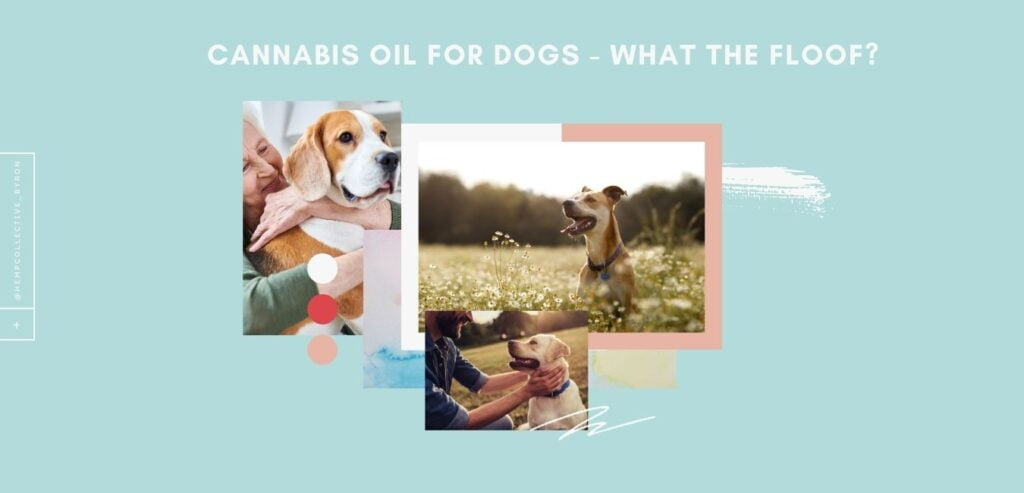 Cannabis-Oil-For-Dogs