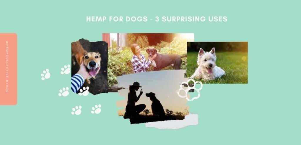 Hemp-For-Dogs