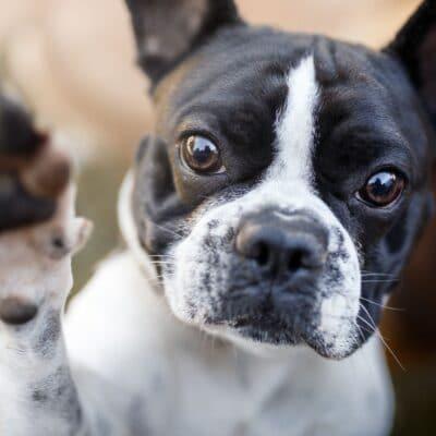 Hemp-Oil-Uses-For-Dogs