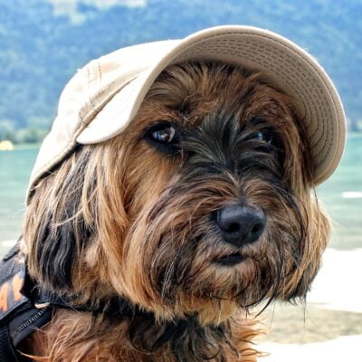 Dog-Friendly-Accommodation-Byron-Bay