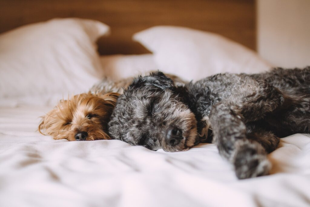 Do-Dogs-Have-An-Endocannabinoid-System?