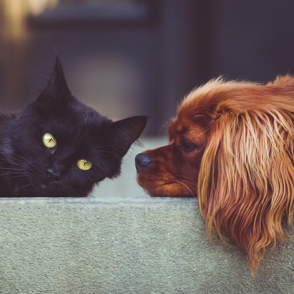 Endocannabinoid-System-In-Dogs-And-Cats
