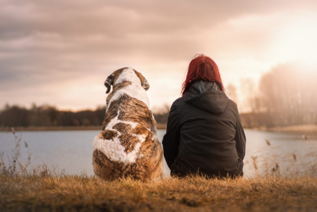Benefits-Of-CBD-For-Dogs