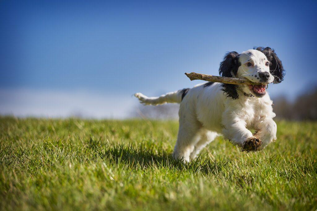Dog-zodiac-signs